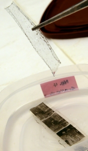 The acetate base successfully removed from the gelatin image layer.